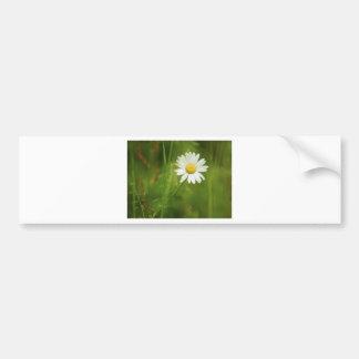Ox-Eye Daisy Summertime Design Bumper Sticker