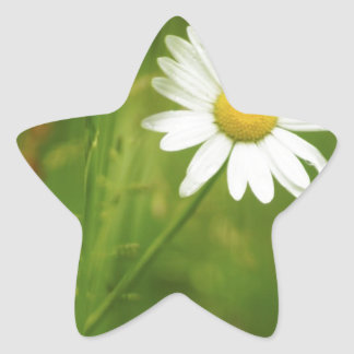 Ox-Eye Daisy Summertime Design Star Sticker