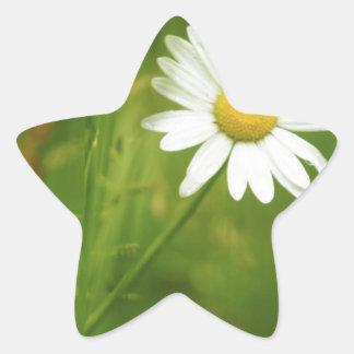 Ox-Eye Daisy Summertime Design Star Stickers