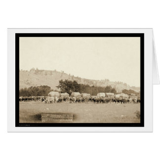 Ox Teams & Wagons Freighting Black Hills SD 1887 Greeting Card