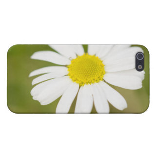 Oxeye Daisy Cover For iPhone 5/5S