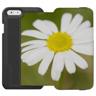 Oxeye Daisy Incipio Watson™ iPhone 6 Wallet Case