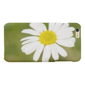 Oxeye Daisy iPhone 6 Plus Case
