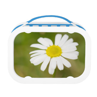Oxeye Daisy Lunch Boxes
