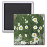 Oxeye Daisy Refrigerator Magnet