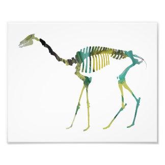 oxydactylus skeleton photograph