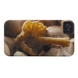 Oyster mushrooms, shiitake mushrooms, chestnut iPhone 4 Case-Mate cases