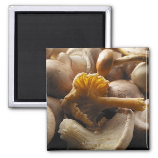 Oyster mushrooms, shiitake mushrooms, chestnut square magnet