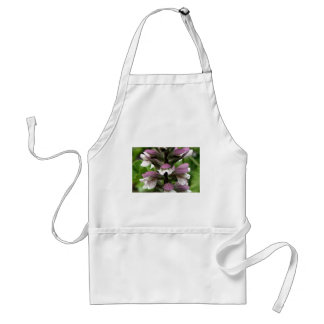Oyster plant flower in bloom aprons