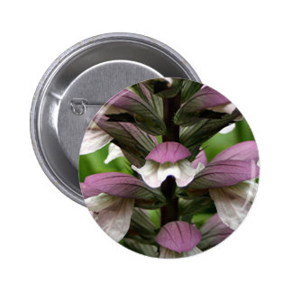 Oyster plant flower in bloom button