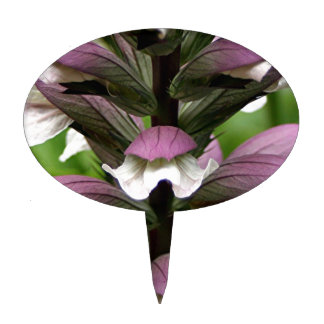 Oyster plant flower in bloom cake pick