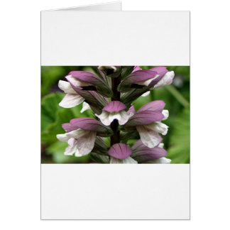 Oyster plant flower in bloom greeting cards
