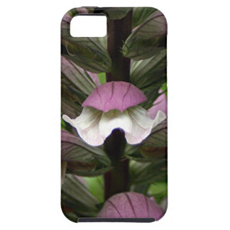 Oyster plant flower in bloom iPhone 5/5S cover