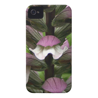 Oyster plant flower in bloom iPhone 4 case