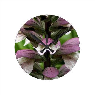Oyster plant flower in bloom clocks