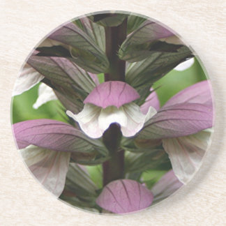Oyster plant flower in bloom drink coaster