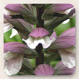 Oyster plant flower in bloom coaster