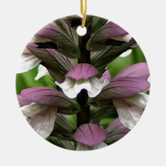 Oyster plant flower in bloom ornament