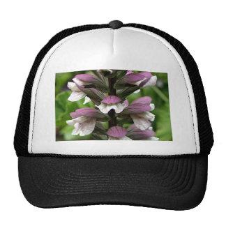 Oyster plant flower in bloom trucker hats