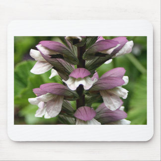 Oyster plant flower in bloom mousepads