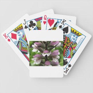 Oyster plant flower in bloom card decks