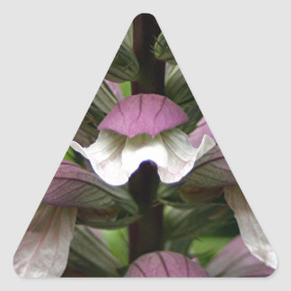 Oyster plant flower in bloom stickers