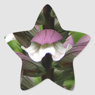 Oyster plant flower in bloom star stickers