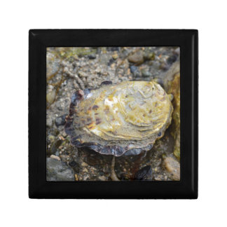 Oyster shell gift box