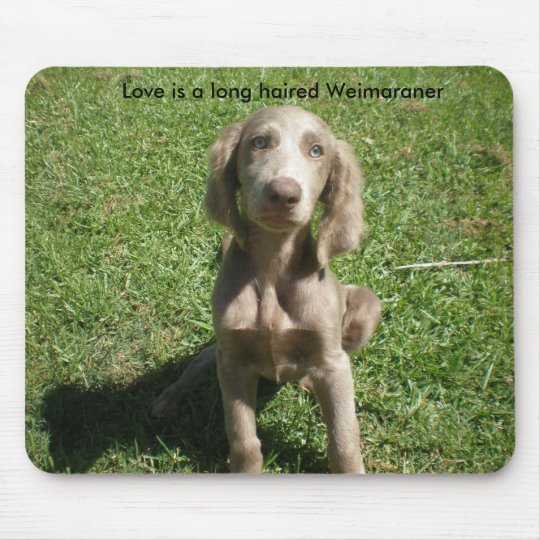 P3091298, Love is a long haired Weimaraner Mouse Mat