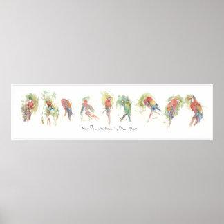 P3, Nine Parrots, Watercolor by Dennis Boyce Poster