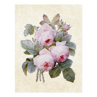 P.J. Redoute Bourbon Rose Postcard