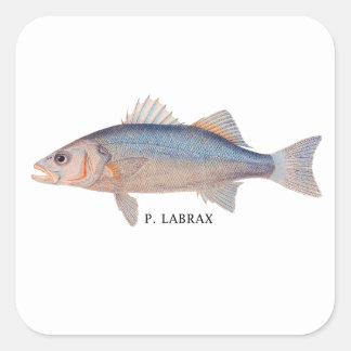 P. Labrax Square Sticker