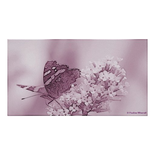 © P Wherrell Contemporary butterfly on buddleia Poster