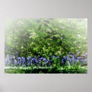 © P Wherrell Dreamy bluebells Fine art photograph Poster