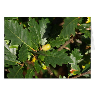 PA130220 acorn Greeting Card