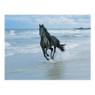 paard wenskaart