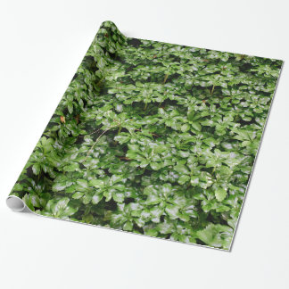 Pachysandra Green Wrapping Paper