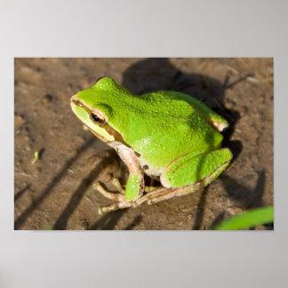 Pacific Chorus Frog Poster