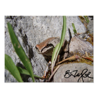Pacific Chorus Frog Posters