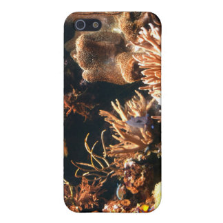 Pacific Coral Reef iPhone Case
