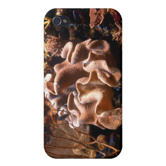 Pacific Coral Reef iPhone Case Cover For iPhone 4
