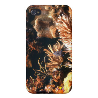 Pacific Coral Reef iPhone Case iPhone 4 Case