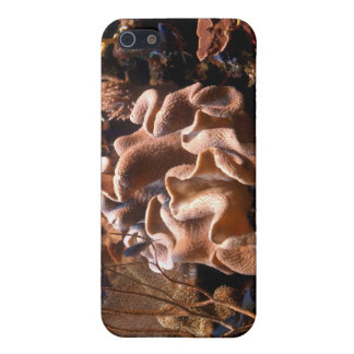 Pacific Coral Reef iPhone Case iPhone 5/5S Covers