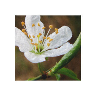 Pacific Crabapple Gallery Wrap Canvas