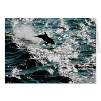 Pacific Dolphin Card