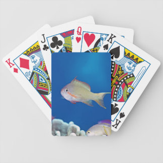 Pacific fairly baslet bicycle playing cards