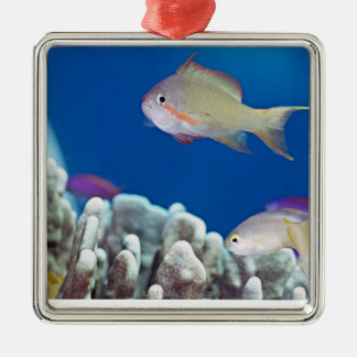 Pacific fairly baslet christmas ornament