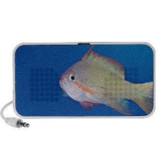 Pacific fairly baslet laptop speaker