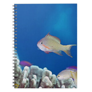 Pacific fairly baslet notebook
