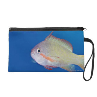 Pacific fairly baslet wristlet